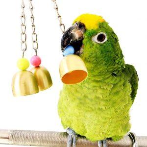 Bwogue Bell Bird Toy