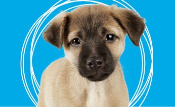 Choosing the right pet! Ten Rules to Consider.